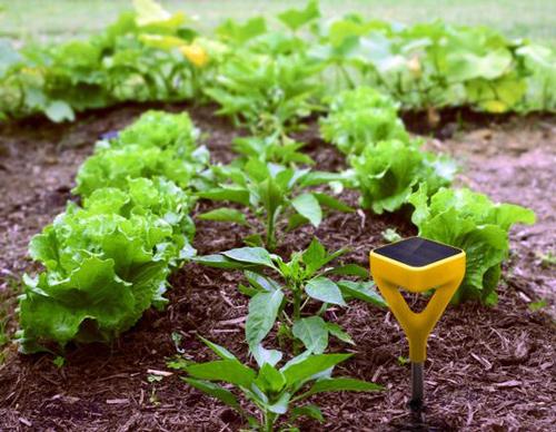 هوشمند سازی گلخانه